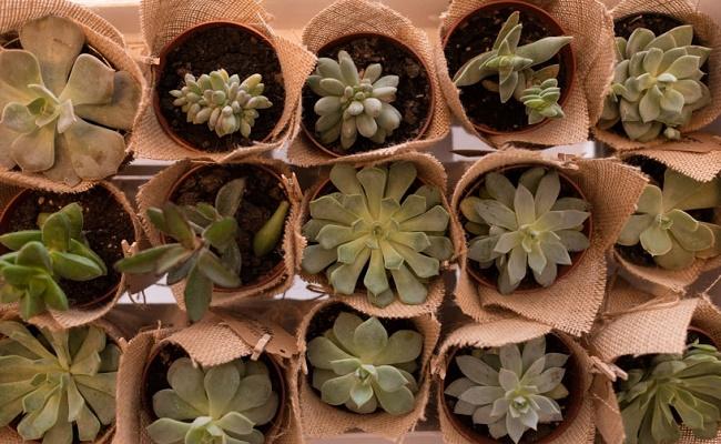 Regalos para invitados ecológicos